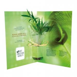 carte voeux plante postale