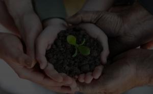 objet publicitaire écologique plante