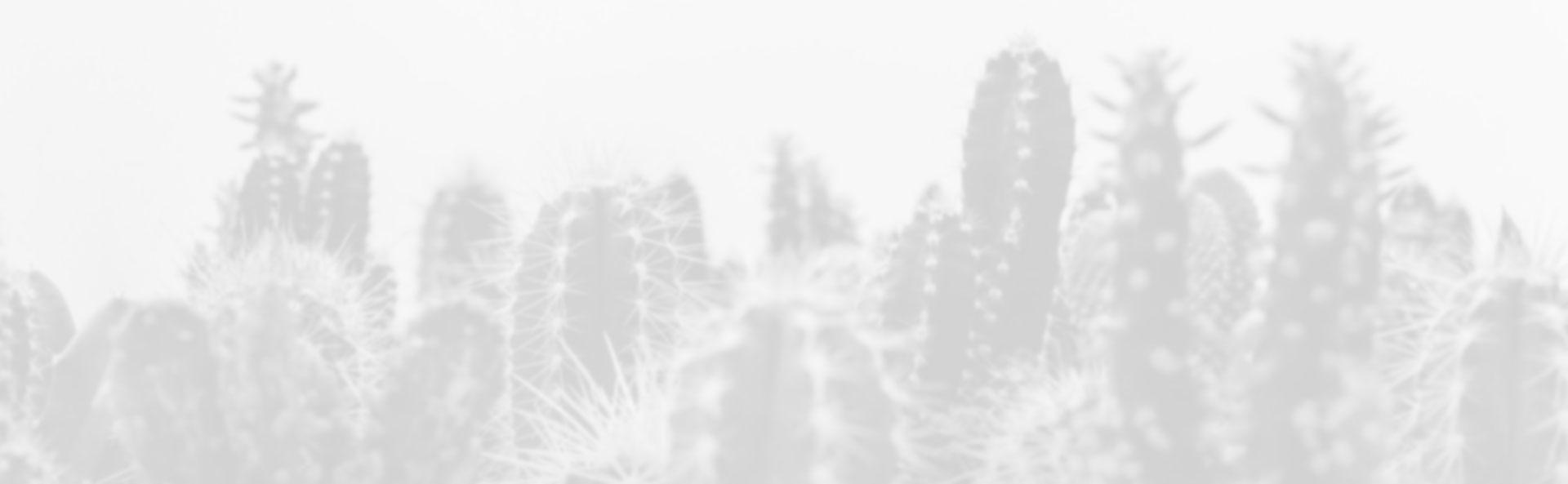 fond cactus